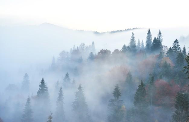Ученые проанализировали симптом «мозгового тумана» у пациентов с гипотиреозом